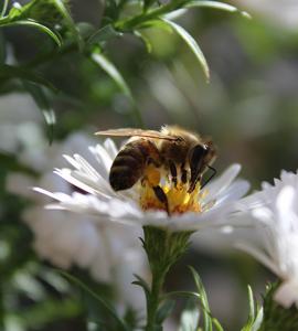 alternatives to pesticide use