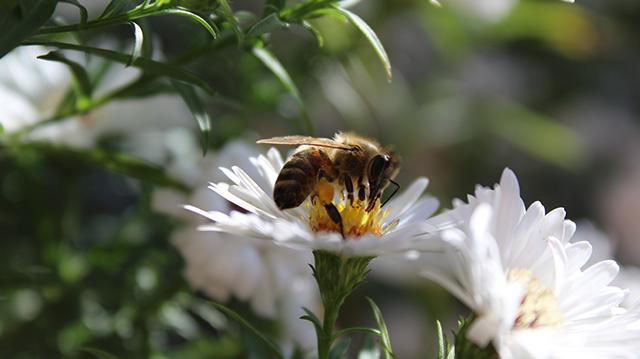 bee - Alternatives to pesticide